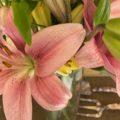 Pink Iris with garden tools