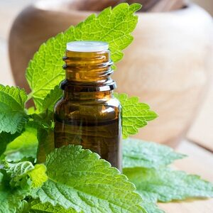 Botle of lemon balm essential oil and leaves